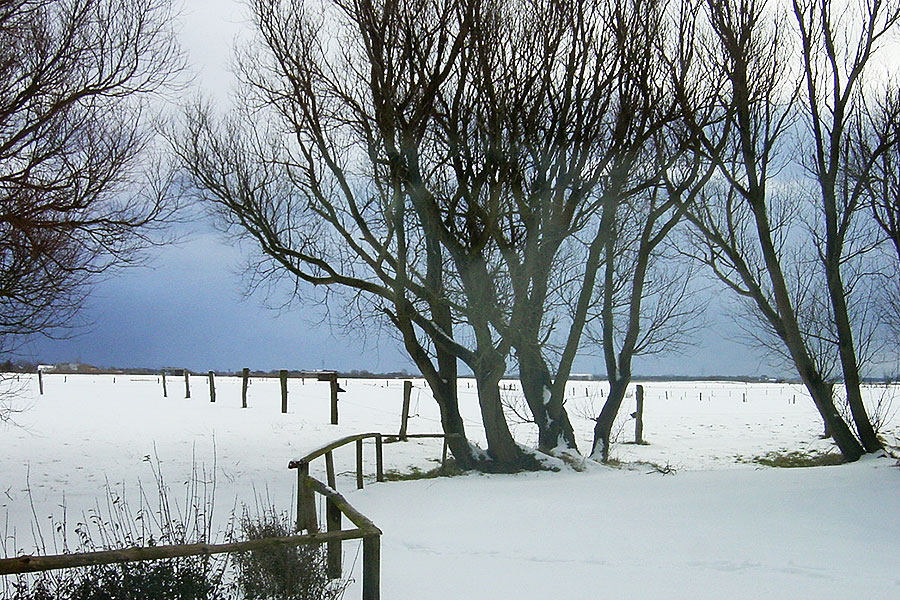 Winterlandschaft am Tholenhof