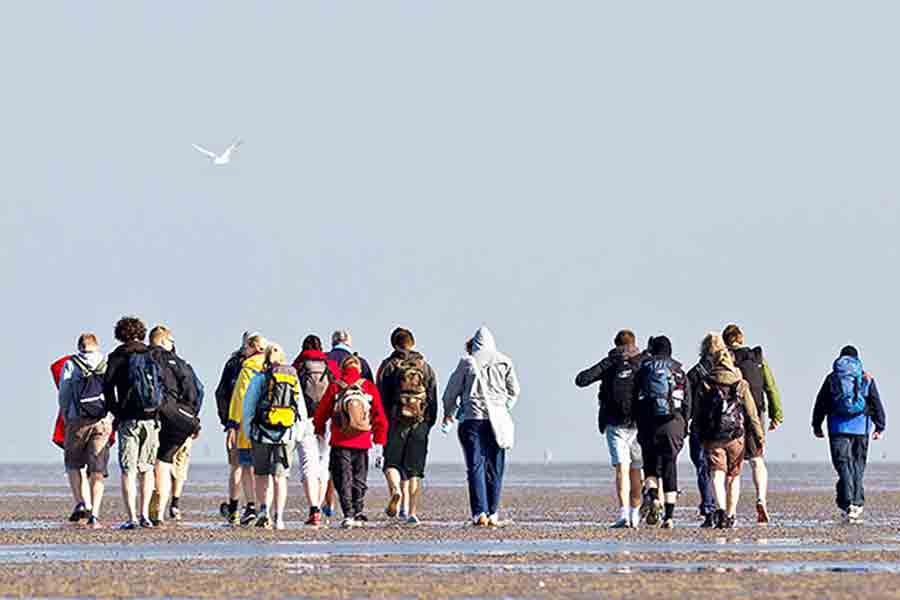 Wattwanderung in Gruppen und das Watt erkunden